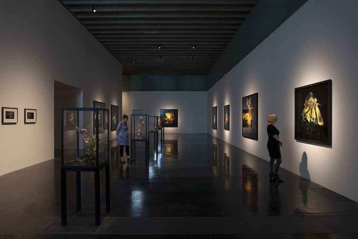 Mat-Collishaw-New-Art-Gallery-Walsall-Installation-View-2015 BlainSouthern