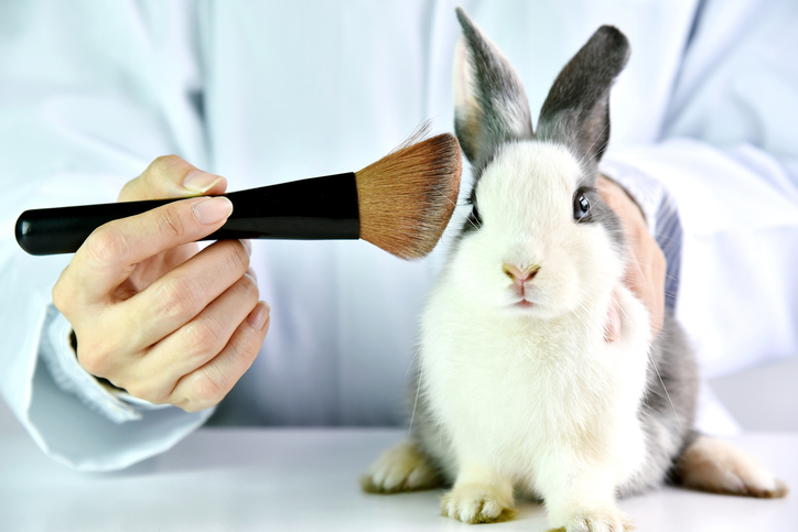 animal testing argumentative essay