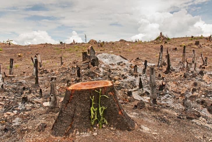 Essay on dangers of deforestation