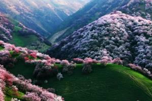 Voyage dans la vallée des abricotiers