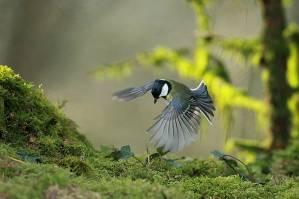 L'inquiétante disparition des oiseaux