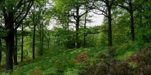 Youpi ! Une nouvelle forêt en Île-de-France