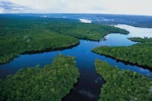 Sauver les forêts : le droit au secours de la planète