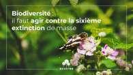 Biodiversité, vers une sixième grande extinction ?