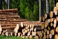 Exploitation forestière : comment ça marche ?