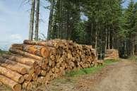 Couper du bois est bon pour l'environnement !