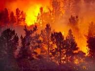 Chaleur, sécheresse : Gare aux feux de forêt !