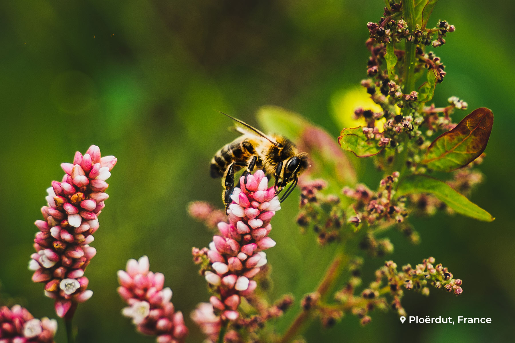 Bijenhaag EcoTree biodiversiteit