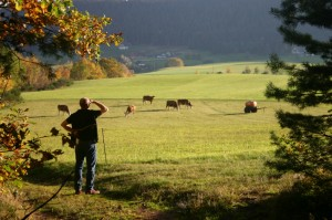 A farmer looking out at a field of cows