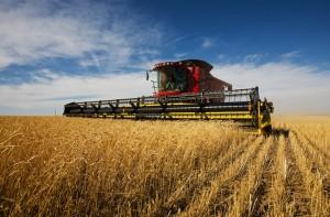 How to Meet Single Farmers – Part II