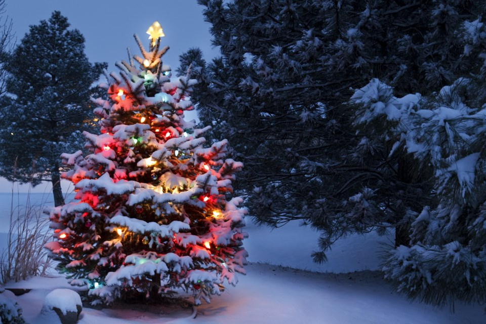How Christmas trees can reveal more about a match's roots