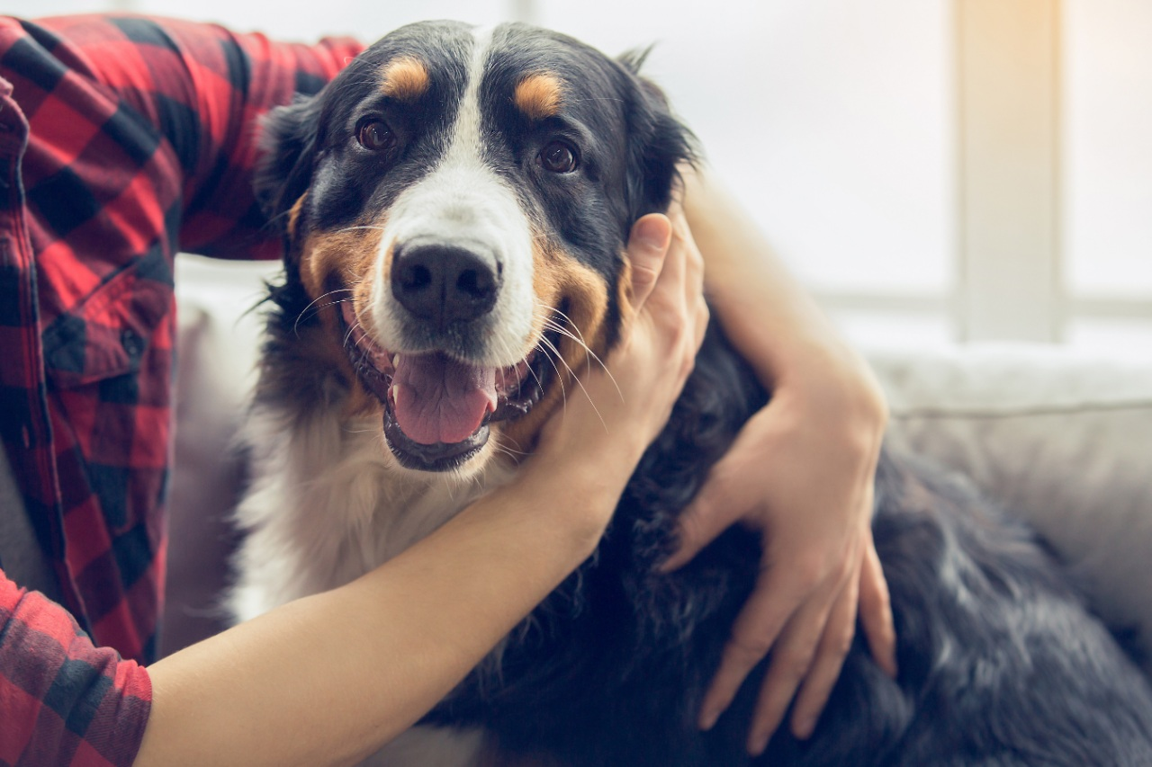 A dog's love in lockdown can avoid us going barking mad