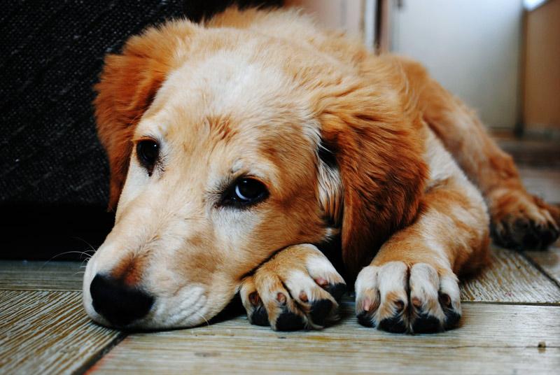Haustiere fotografieren - Hund