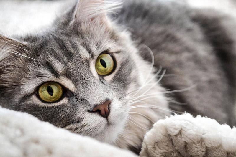 Haustierfotografie Katze