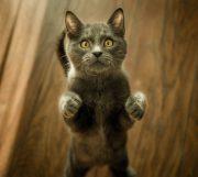 Haustierfotografie Tipps