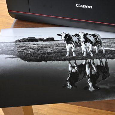 Fotos selber Drucken