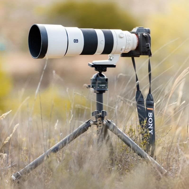 Sony A7RIV Wildlife