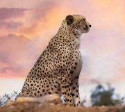 Wildlife Fotografie Tipps Header