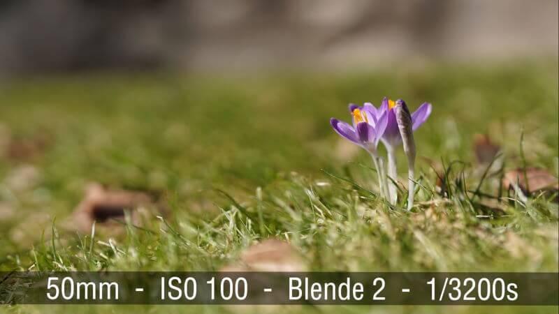 Sony FE 50mm Bokeh Effekt