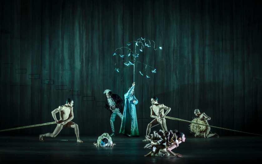 Den Listige Lille Reven Foto Yanniv Cohen