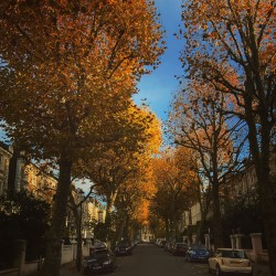 Autumn on my street