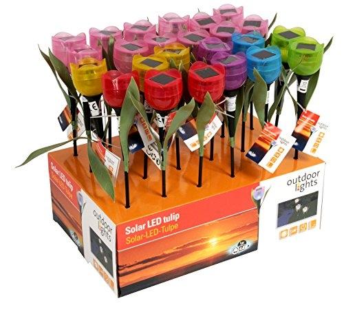 Edco 8711252921545,5x 5,5x 33cm luce solare Tulipano, Colori assortiti, 1 Pezzo