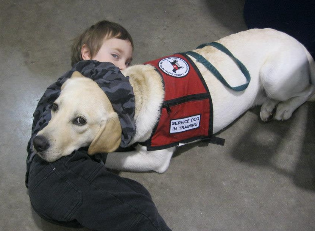 service dogs for autism The dog has to be specially selected and specially trained, but yes, an autism service dog can be really helpful for a child with autism by the way, i recommend all of temple grandin's books, including thinking in pictures , animals make us human , animals in translation , the way i see it , and the autistic brain.