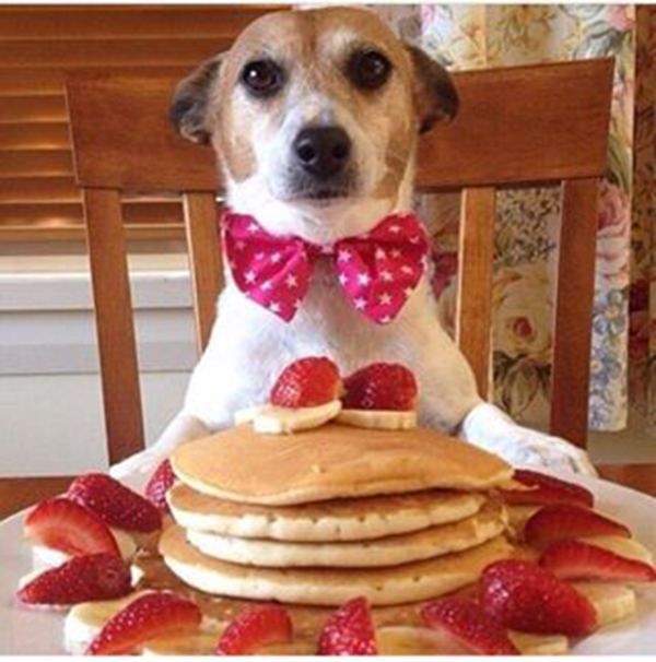dog-and-pancakes