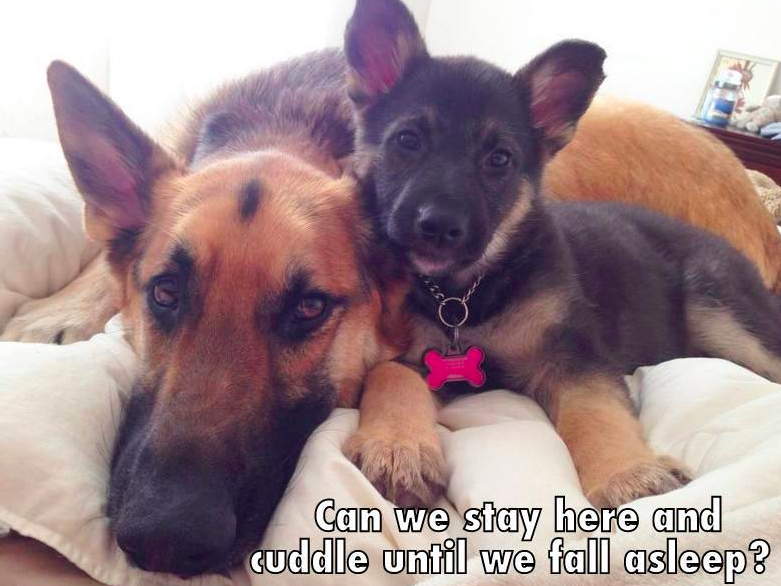 17 Times German Shepherd Puppies Proved Theyre The Best