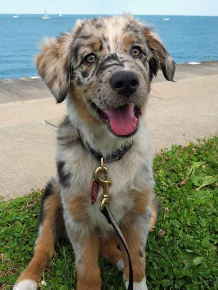 Get ready for serious coat envy and check out these 38 dogs with amazing unique markings. So many gorgeous patterned pups! Bowwow Times