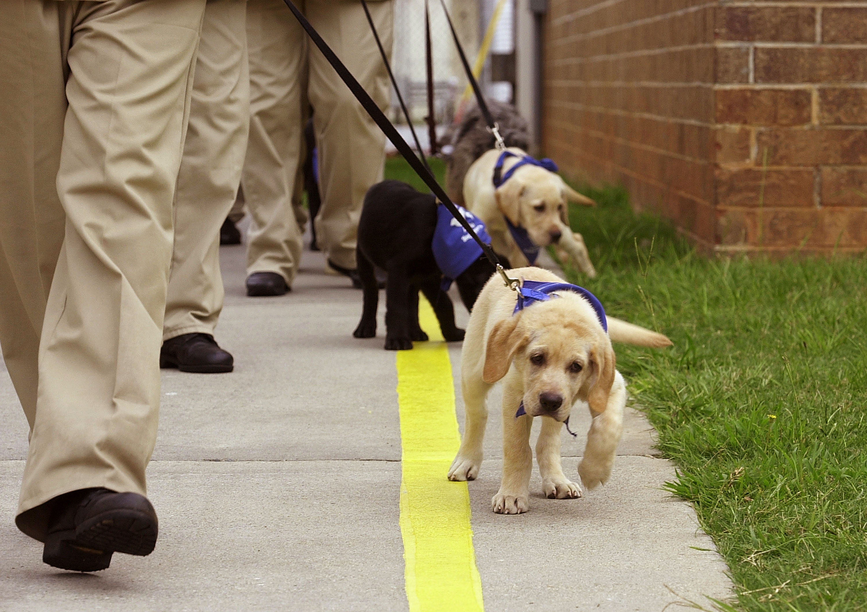 How do guide dogs help blind people?