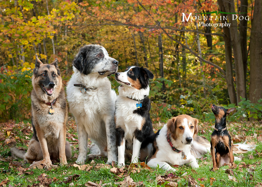 MDP_OurPack Common Mistakes Made By Dog Owners BowWow Times