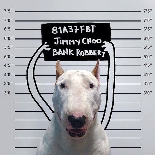 18 Reasons You Should Never Adopt A Bull Terrier
