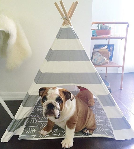 Screen Shot 2015-08-31 at 17.04.19 & 18 Gorgeous Dog Teepees That Will Convince You To Upgrade His Bed ...