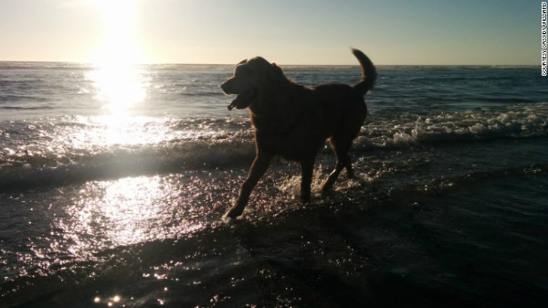 Terminally Ill Dog Gets One Last Dream Day Out At His Humans Beach Wedding BowWow Times terminal cancer