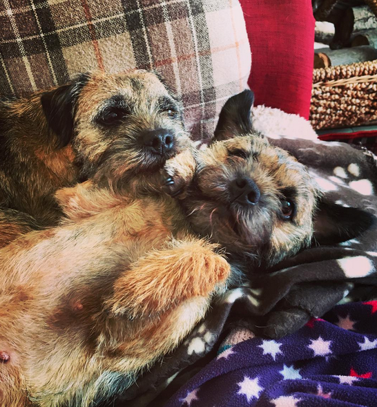 What Does Terrier Mix Mean?