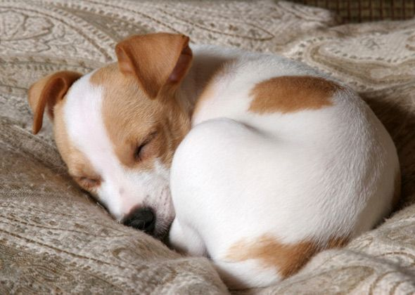What Does Your Dog's Sleeping Position Say About Them?