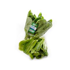 Íslenskt romaine salat