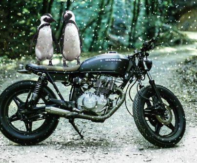 dos pinguinos encima de una moto honda en la nieve