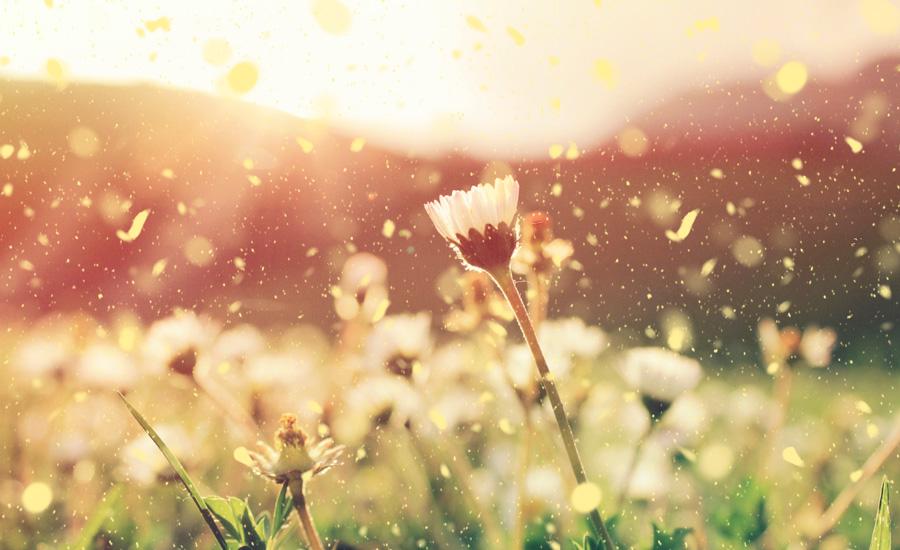 flores-y-polen-que-hacen-de-la-primavera-una-epoca-dificil-para-muchos-moteros