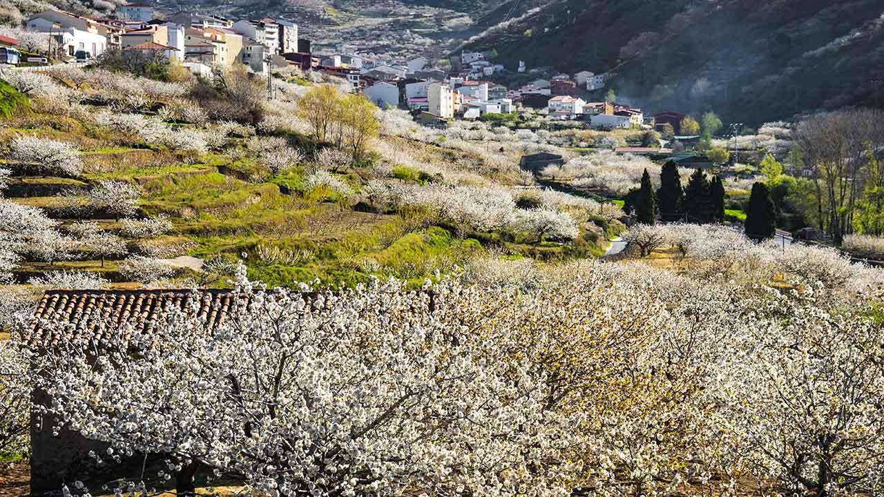 Vista del Valle del Jerte con cerezos en flor