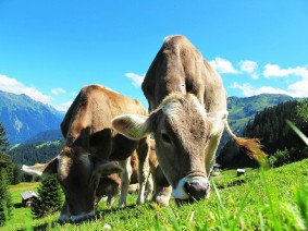 Busreis Tirol Oostenrijk