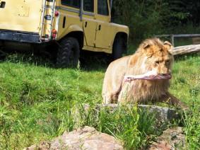 groepsreis ZooParc Overloon