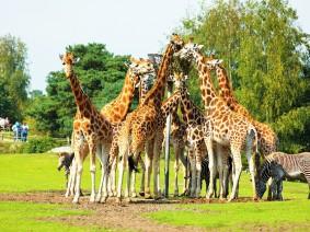 Groepsreis Safaripark Beekse Bergen