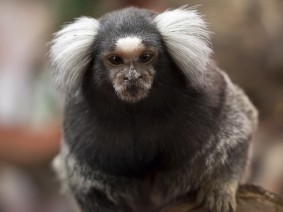 Dagtocht Tropical Zoo