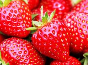 Dagtocht Liefde voor Aardbeien