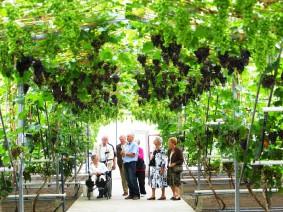 Dagtocht Druiven proeven en varen door het hele Westland