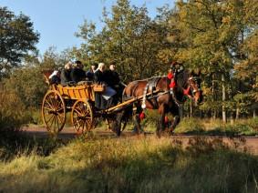 Dagtocht Koets en paard