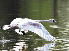 Dagtocht Biesbosch, vogels en verzetstrijders