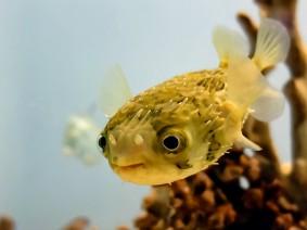 Dagtocht Zee aquarium en Schoorl